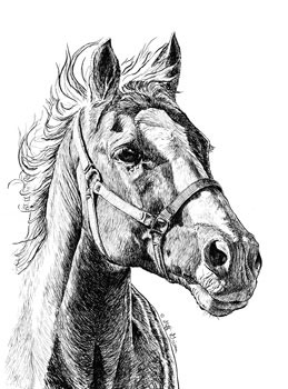 amarillo-quarterhorse-ink