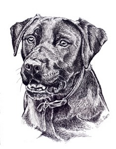 black-lab-drawing-pen