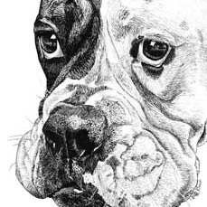 Pet Portraits in Pen and Ink | Pet Portraits by Stephanie Grimes