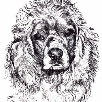 Brandon-Cocker Spaniel