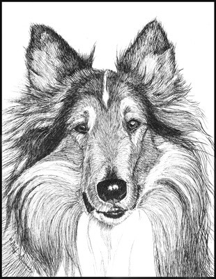 collie-copy