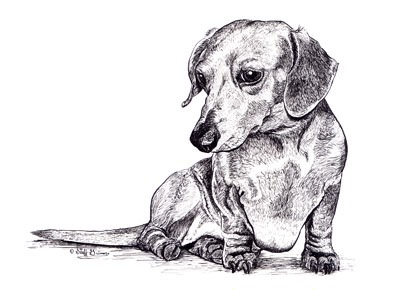 putter-dachshound-ink
