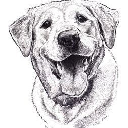 scout-labrador-ink